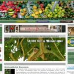 20120304amazonasportal-full