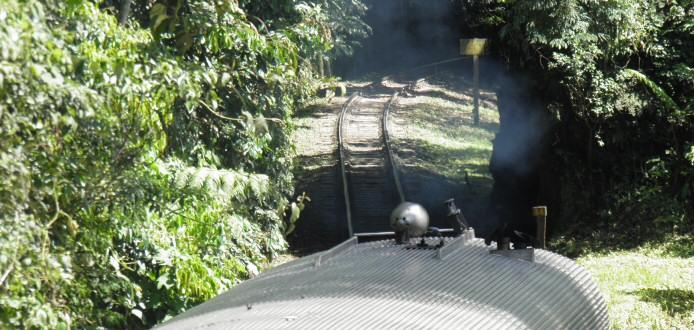 Wer nicht zu Fuss den atlantischen Regenwald erkunden will, der kann es auch mit dem Zug tun.