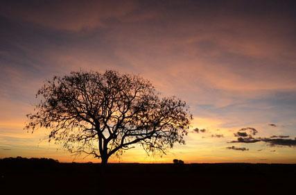 Pr-do-sol no Cerrado goiano