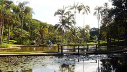 jardim_botanico