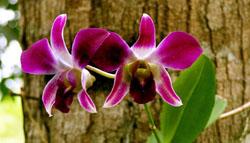 Manaus_Botanischer Garten