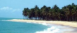 praia do gunga_baixaki
