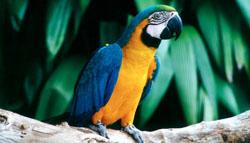 vogelpark_papageio